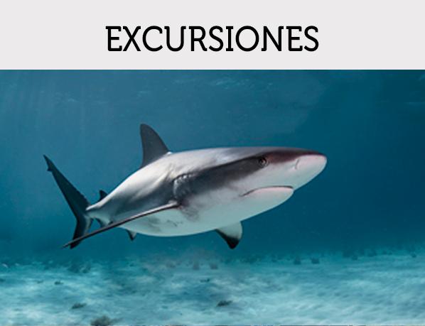Img-Excrusiones-Ofertas